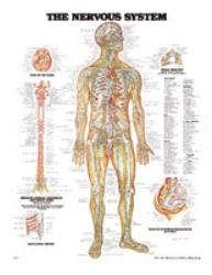 Plansch anatomi nerver